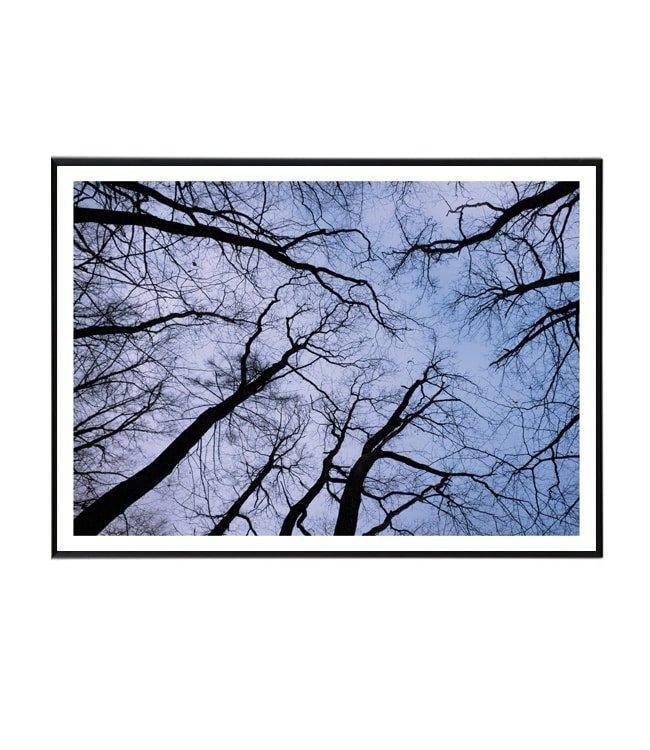 stromy_nebe obraz design studio la forma
