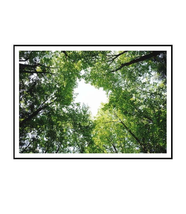 Obraz stromy Do nebe VI La forma