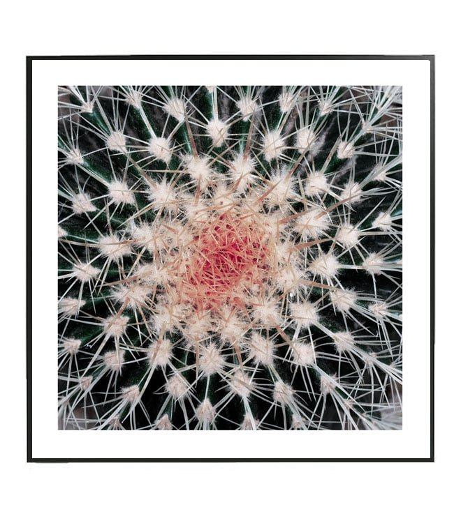 kaktus obraz design studio la forma