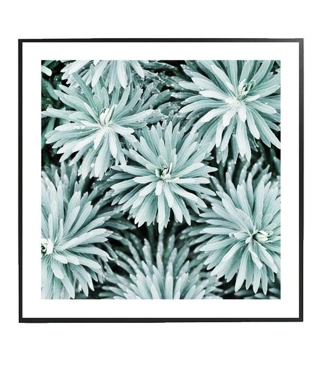 rostlina obraz design studio la forma