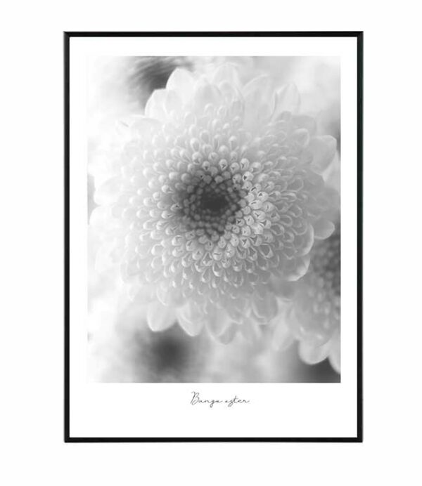 Flower bunga aster 6