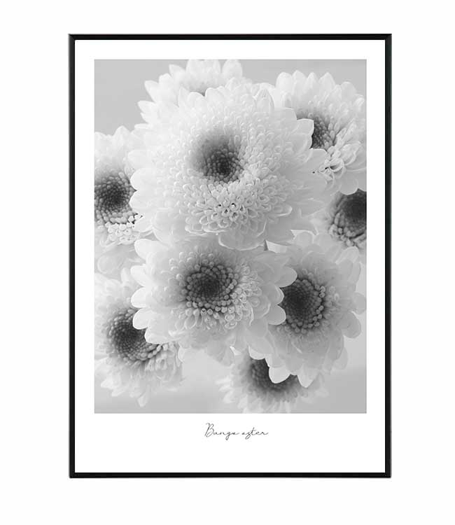 Bunga aster kvetina obraz design studio La forma