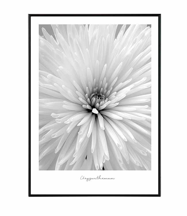 květina chryzantéma obraz design studio la forma