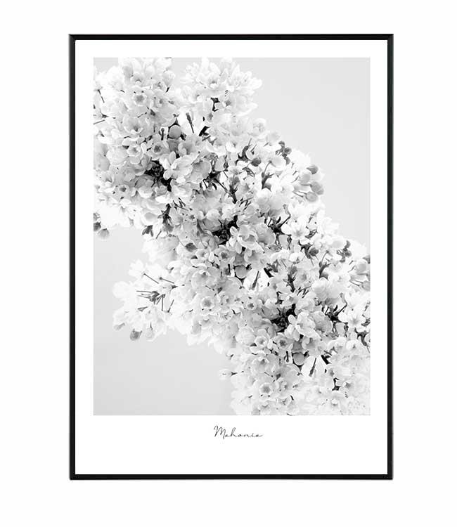 Mahonia květina obraz design studio La forma