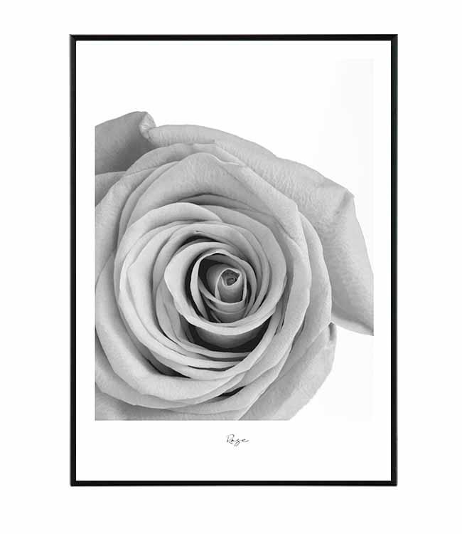 květina růže obraz design studio La forma