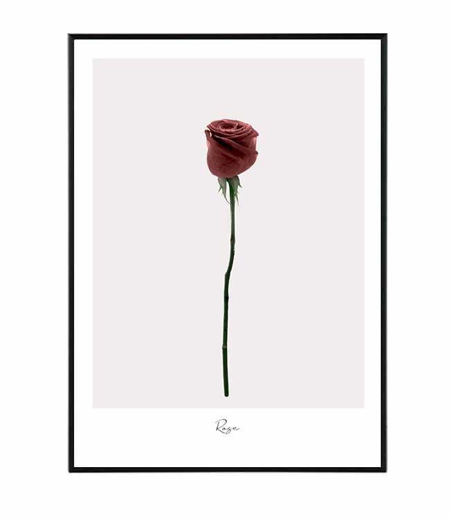 růže obraz design studio la forma
