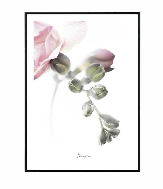 frézie květina obraz design studio la forma