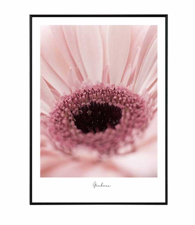 gerbera_ květina obraz design studio La forma