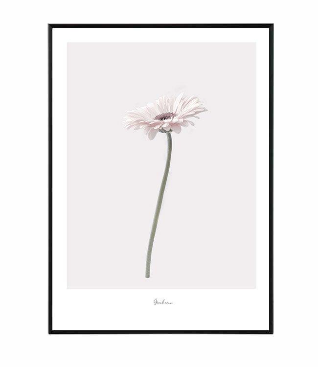 Obraz gerbera květina design studio La forma