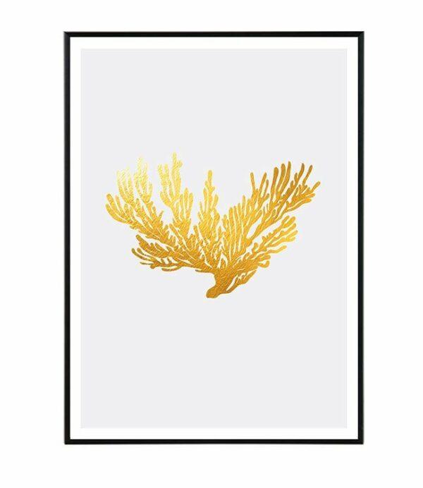 Coral II. 7
