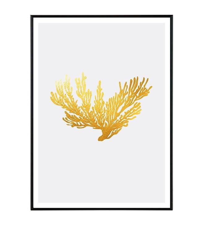 Coral obraz design studio La forma