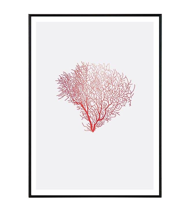Coral design studio laforma obraz