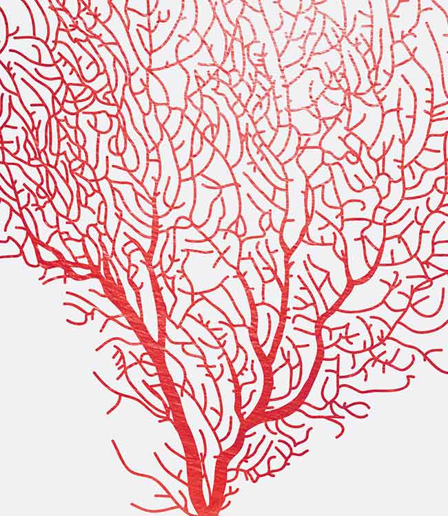 Coral spirit 2