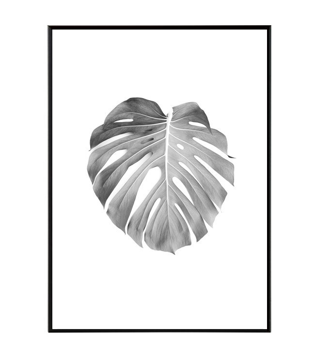 Monstera rostlina design studio La forma