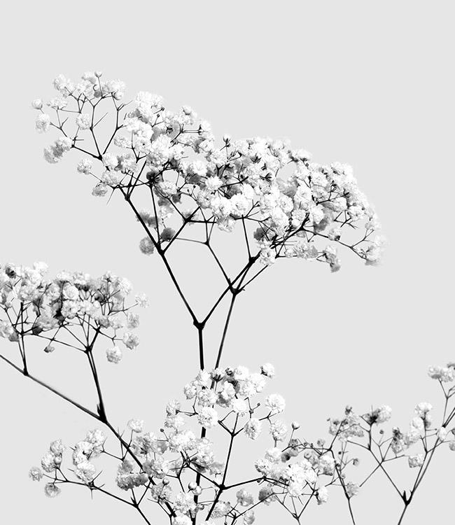 bavlna obraz design studio la forma