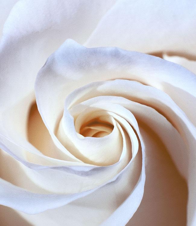 kvetina obraz design studio la forma