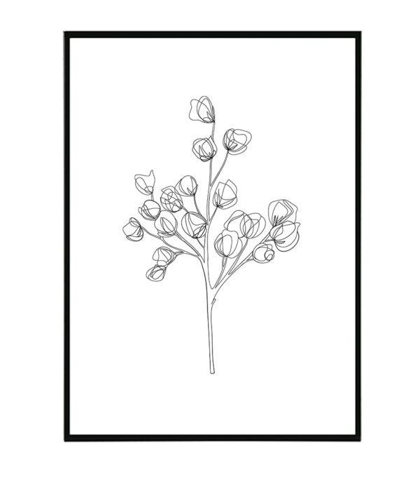 Magnolia 2