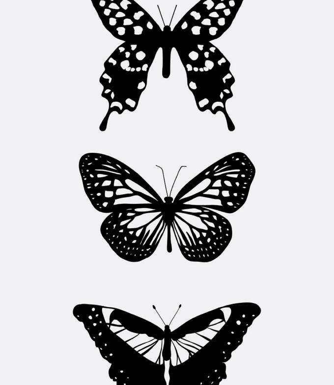 motyly obraz design studio La forma