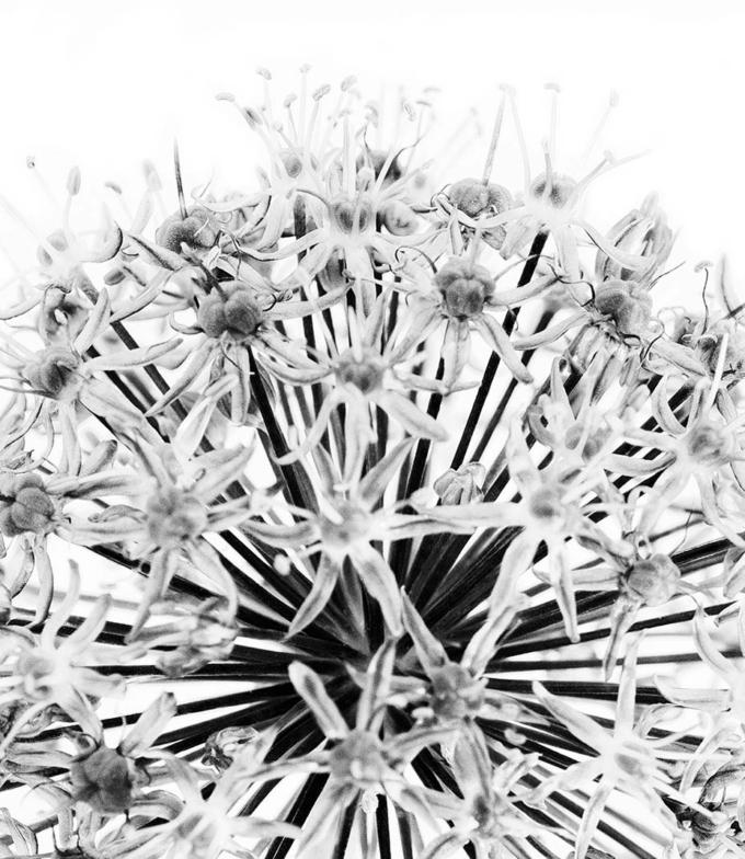 květina obraz design studio La forma
