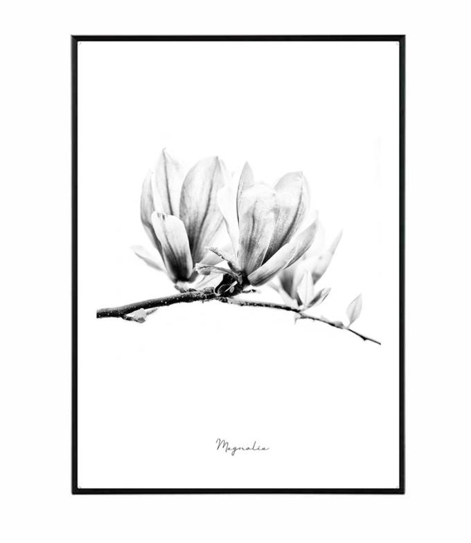 Magnolie obraz plakat  design studio La forma