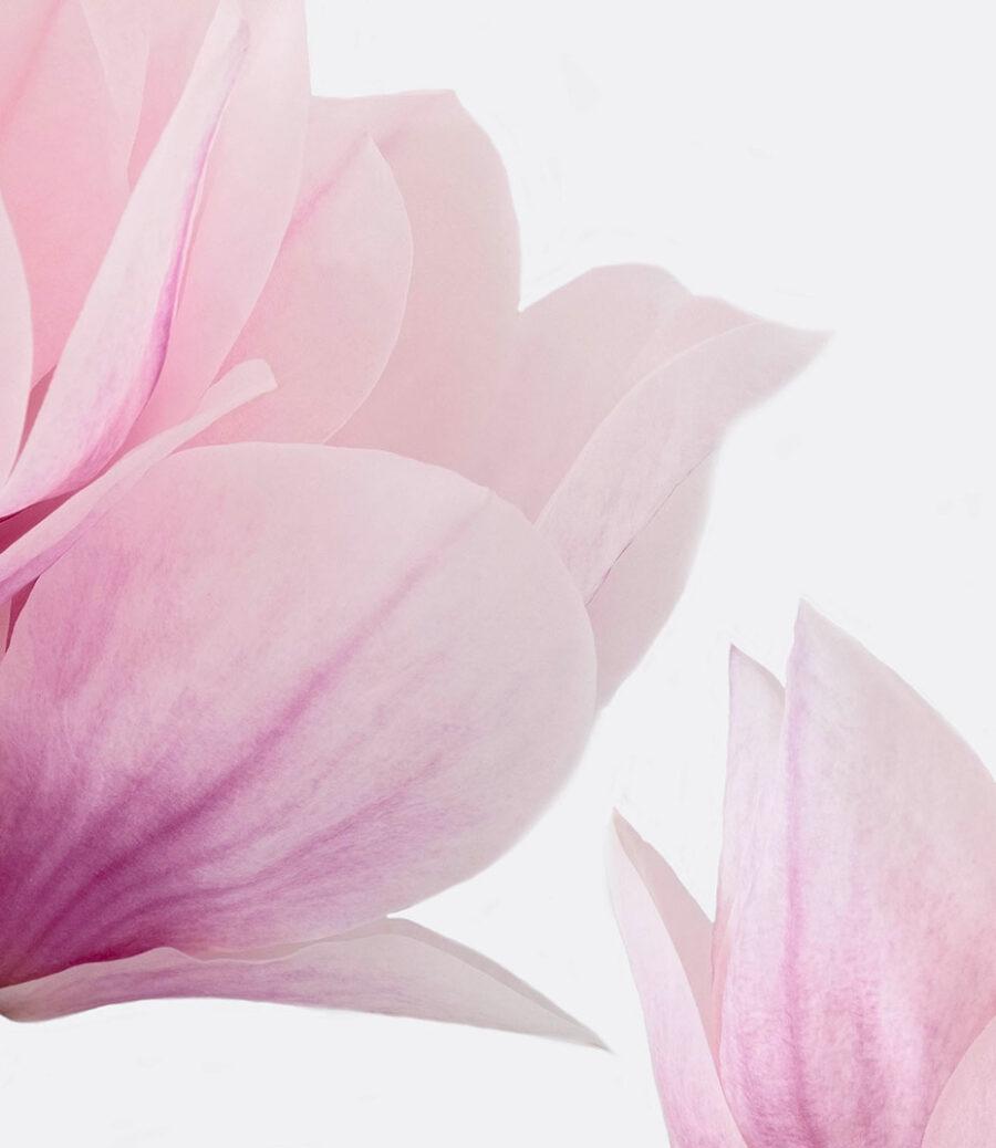 Soul of Magnolia 2